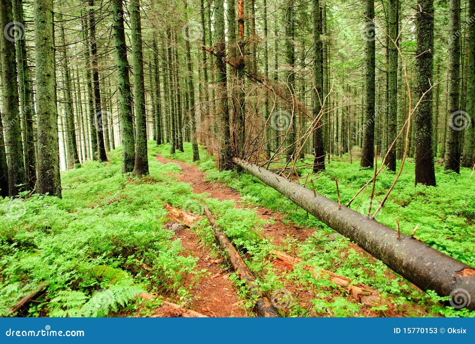 πεσμένα δασικά δέντρα