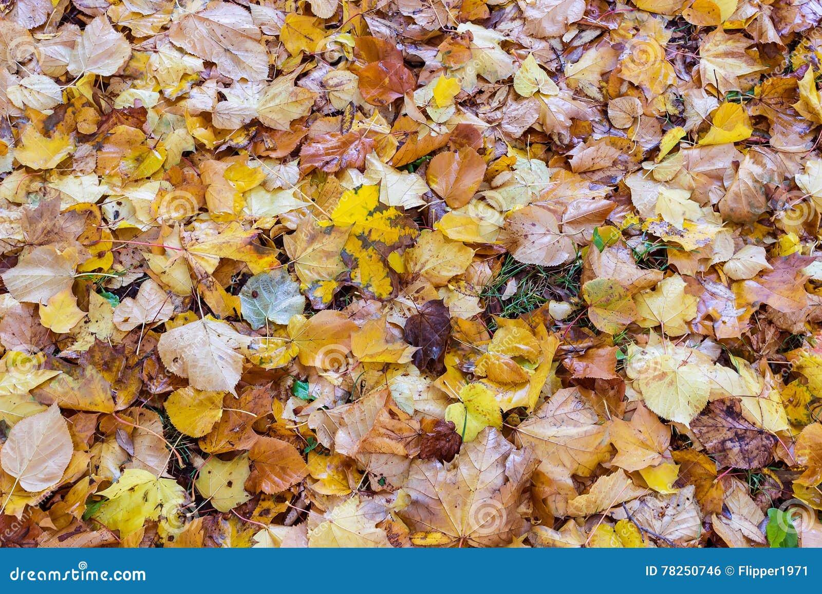 Πεσμένα φύλλα στη χλόη στο πάρκο