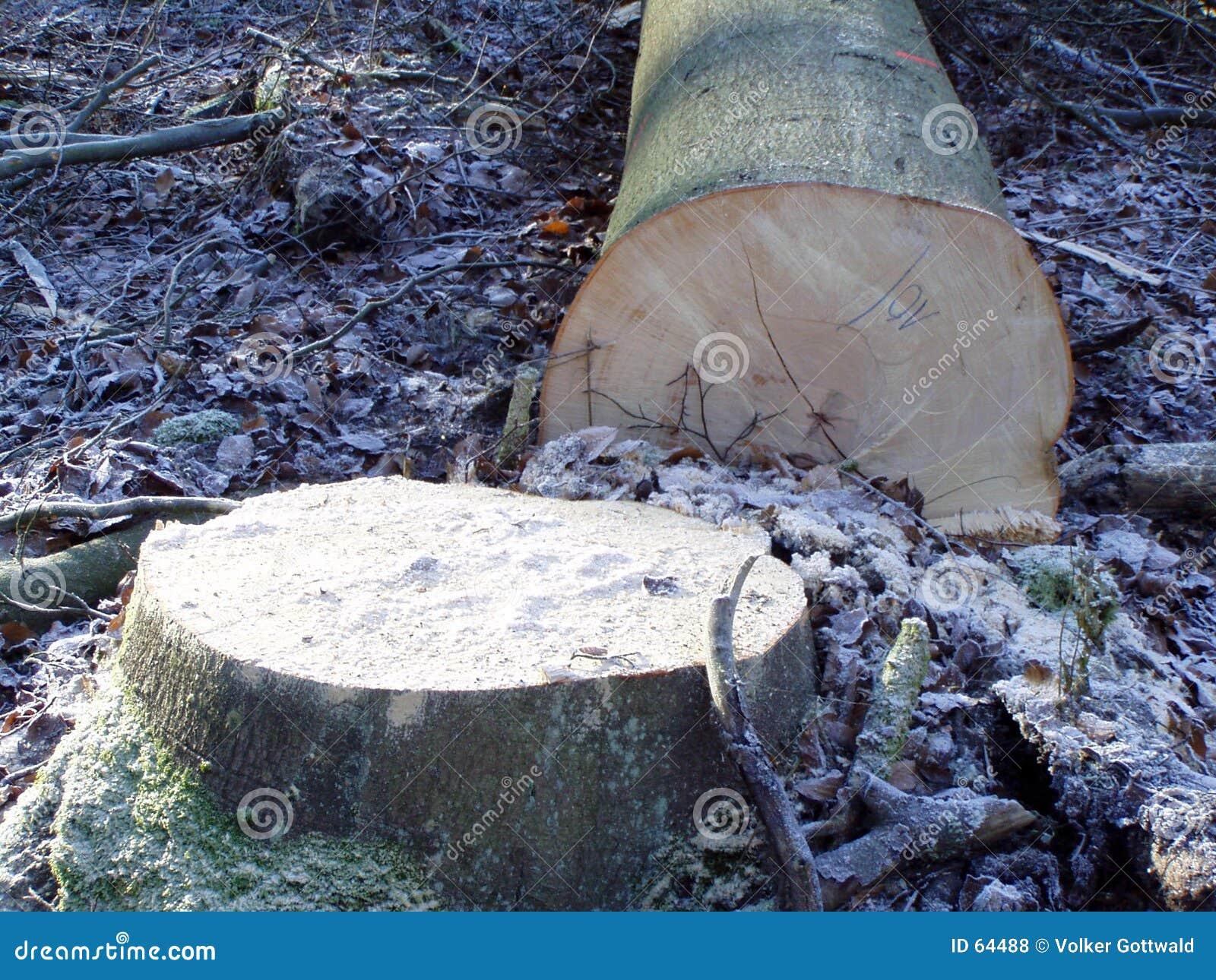 Download πεσμένο δέντρο στοκ εικόνες. εικόνα από χιόνι, βακκινίων - 64488