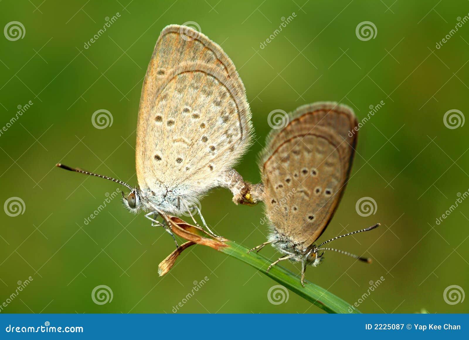 πεταλούδα ζωηρόχρωμη