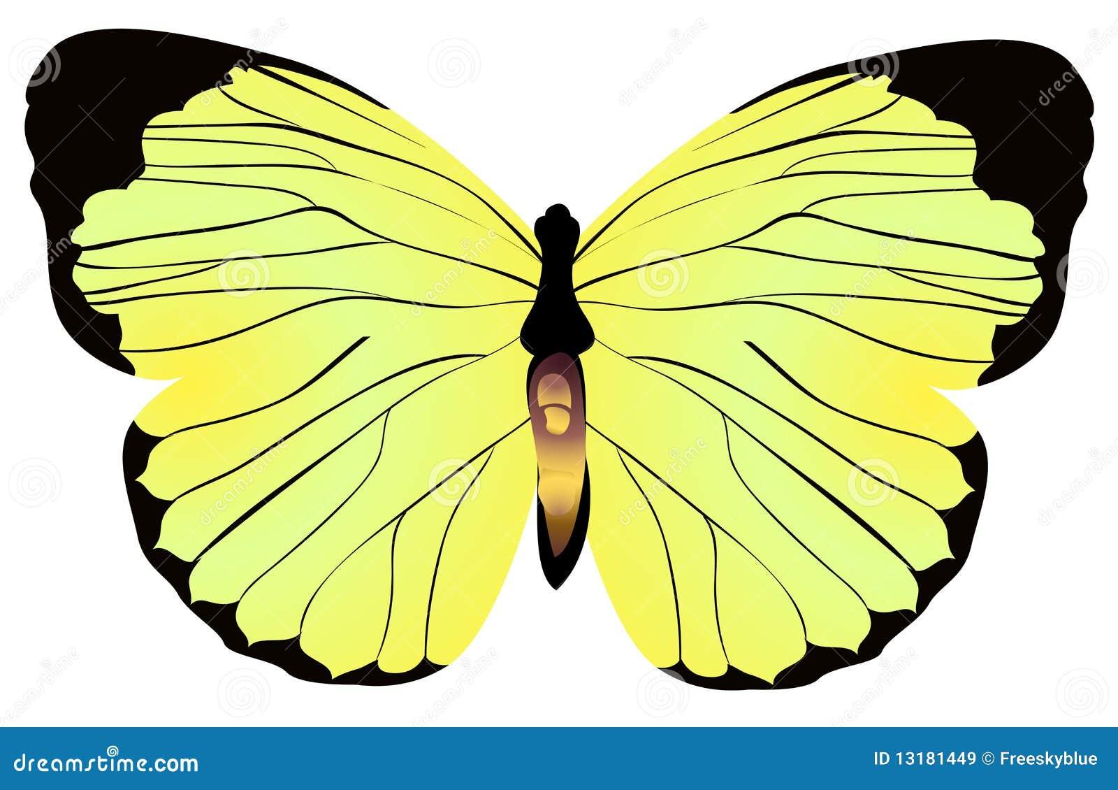 πεταλούδα κίτρινη