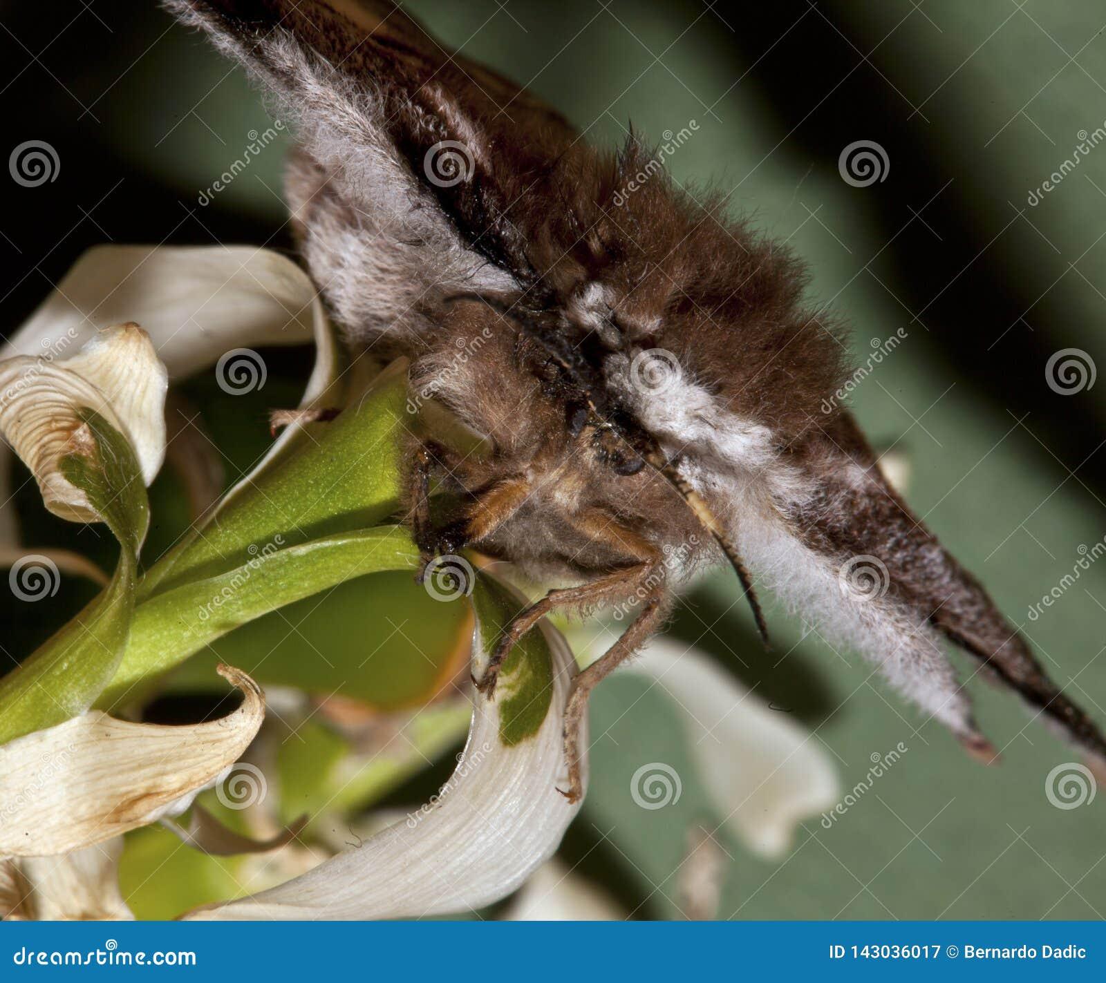 Πεταλούδα στον κλάδο μπαμπού μεγάλο απελευθέρωσης πράσινο ύδωρ φωτογραφίας φύλλων μακρο