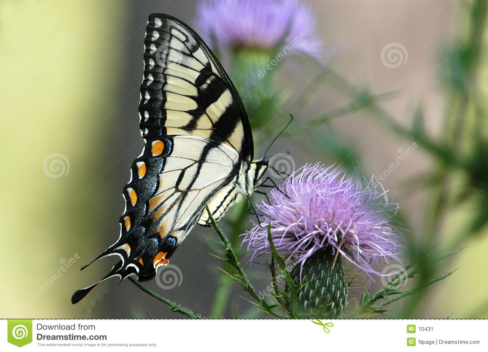 πεταλούδα no6