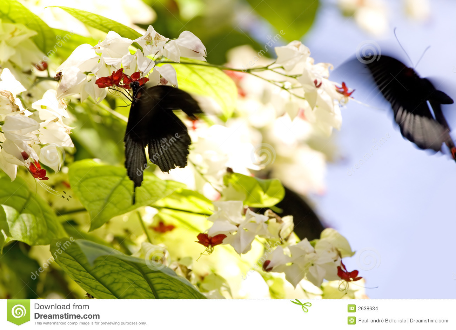 πεταλούδες ενέργειας