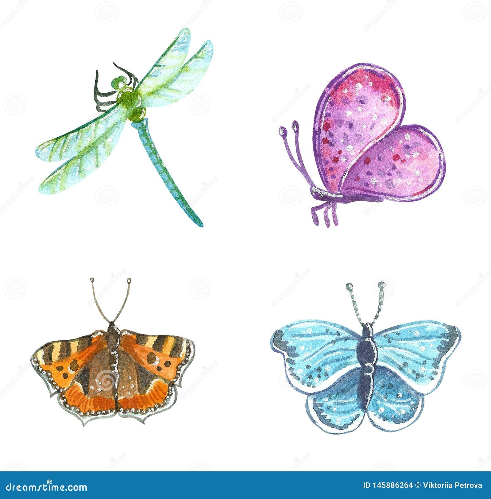 Πεταλούδες κήπων και λιβελλούλη, συρμένη χέρι απεικόνιση watercolor