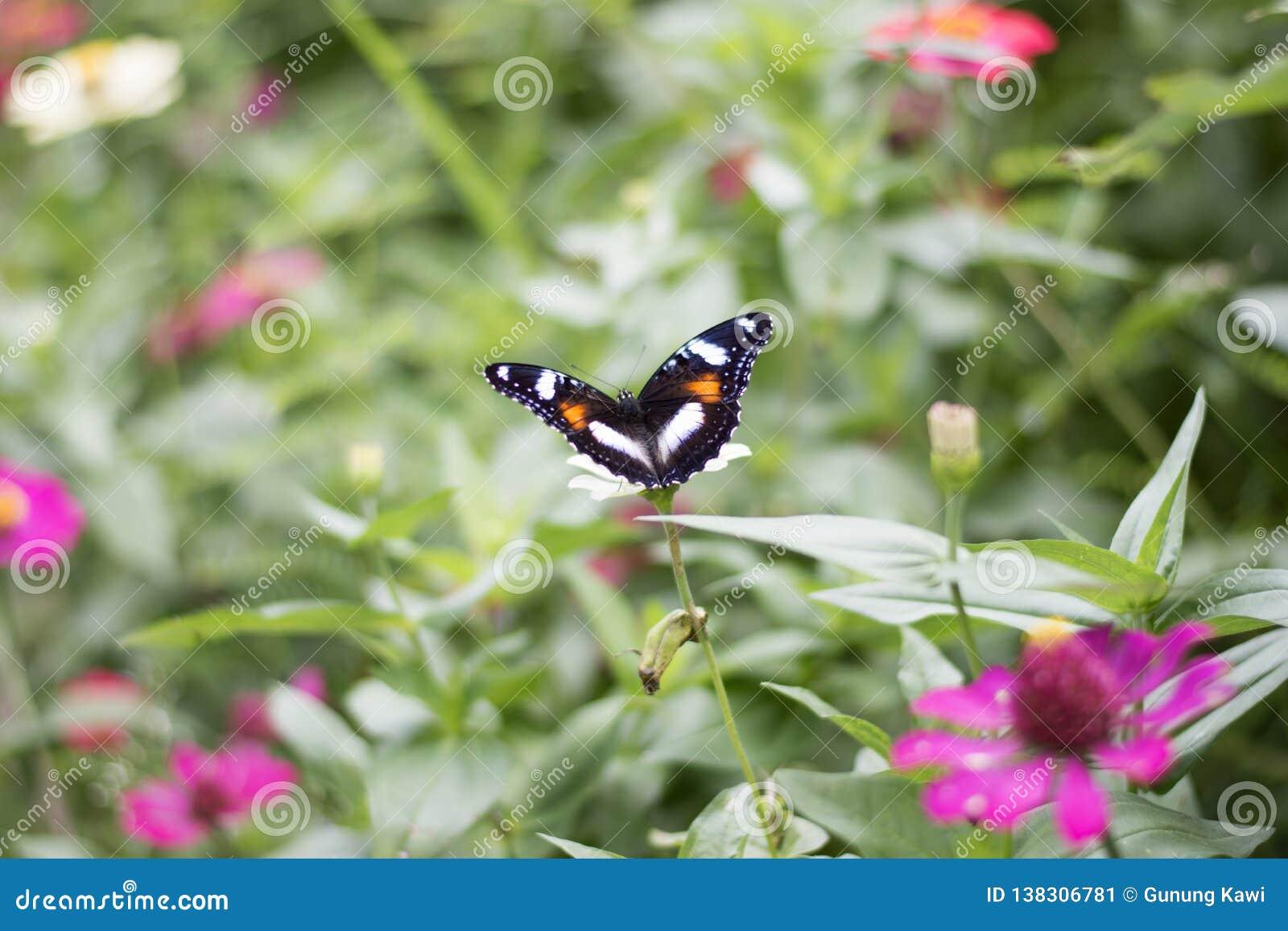 Πεταλούδες στον κήπο λουλουδιών
