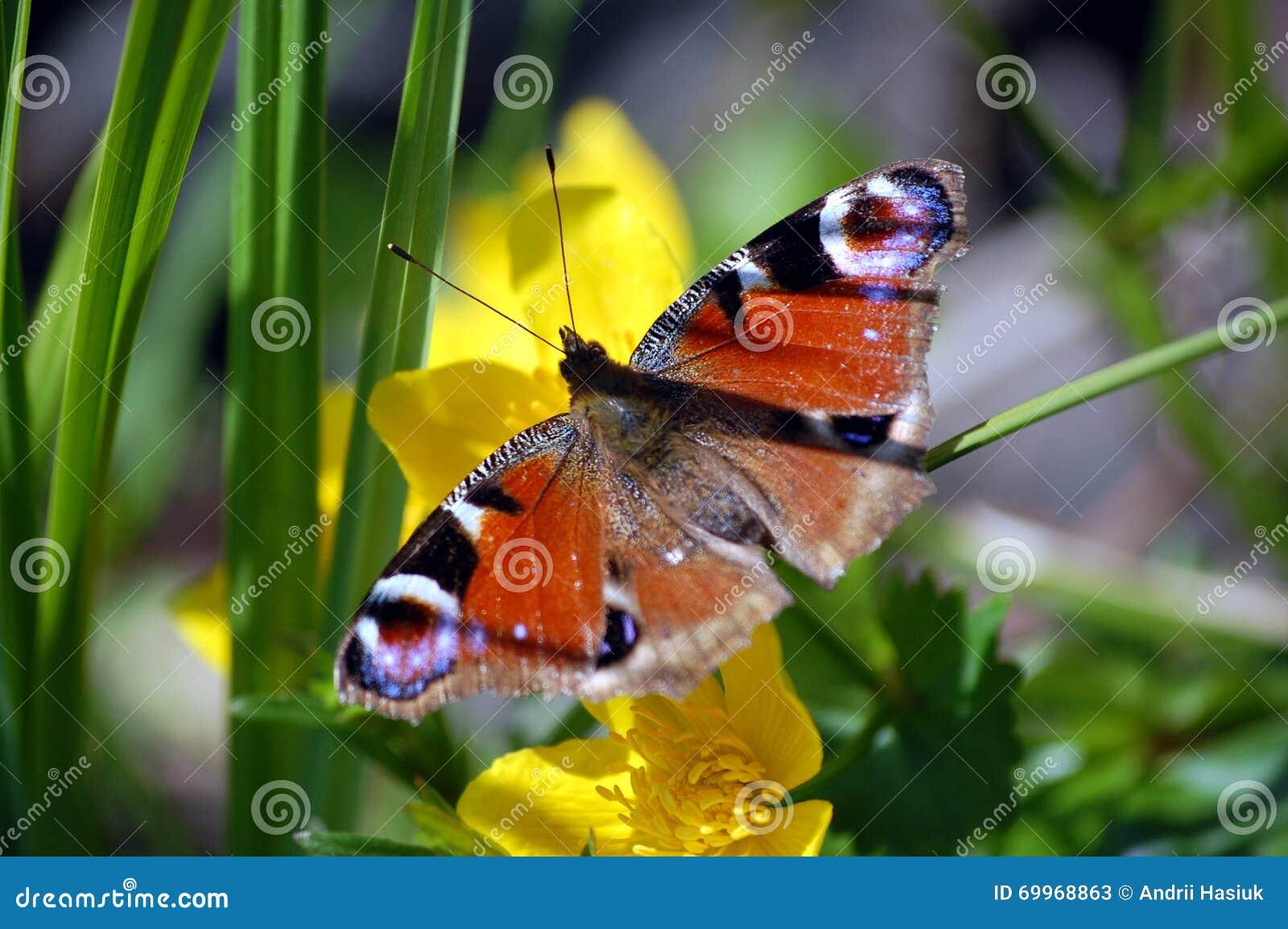 Πεταλούδα σε ένα λουλούδι