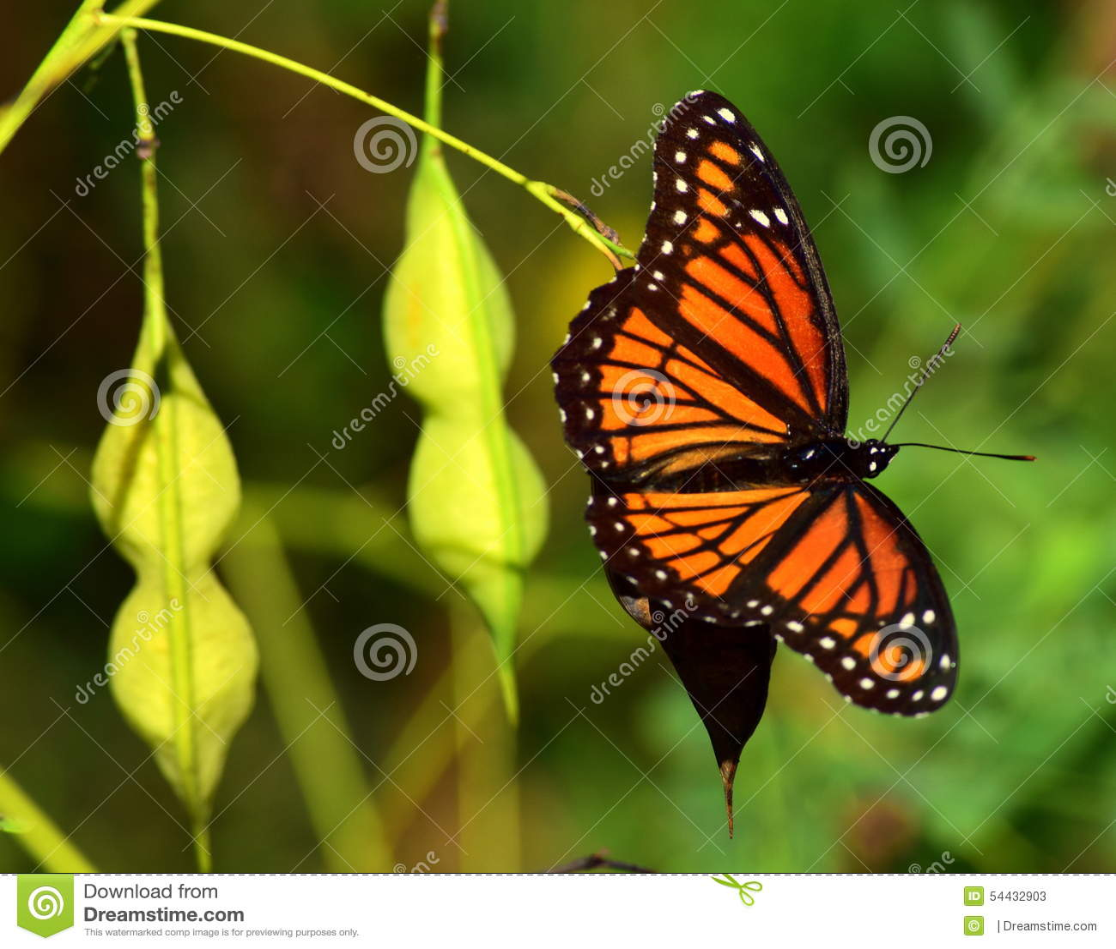 Πεταλούδα στη φύση