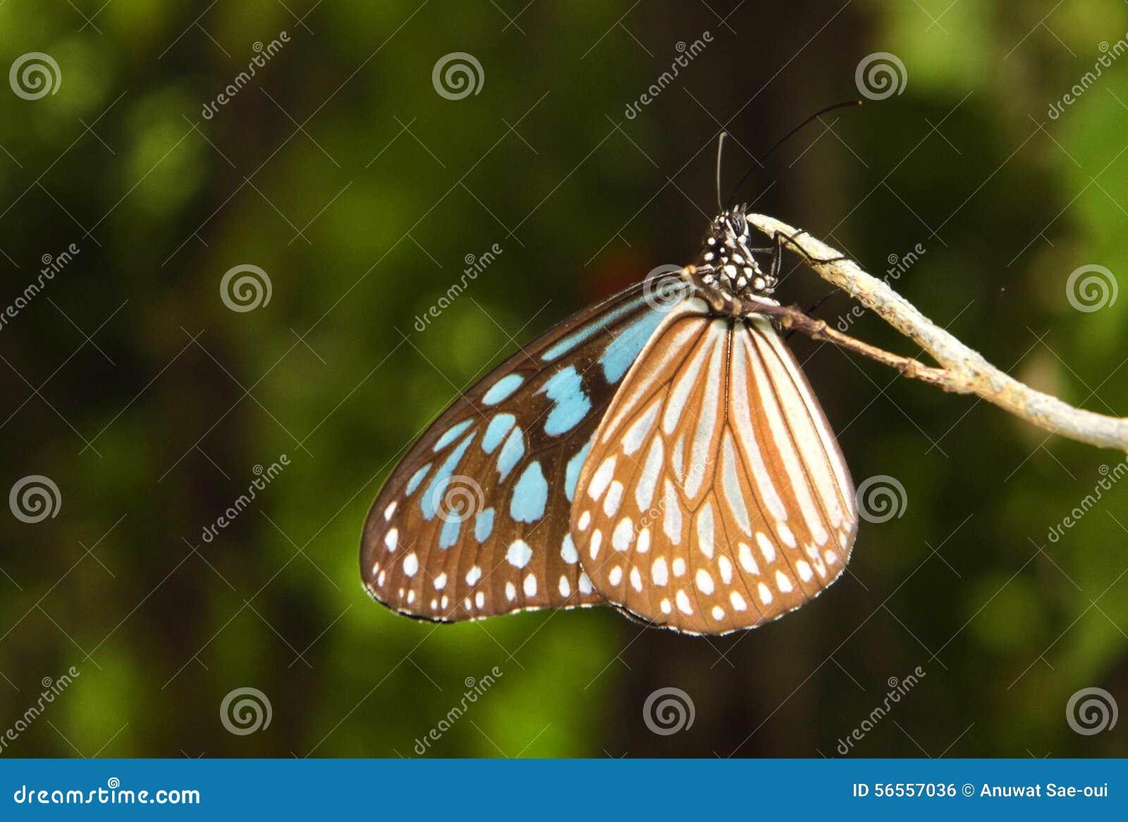 Download Πεταλούδα στη φύση στοκ εικόνες. εικόνα από εποχή, πεταλούδα - 56557036