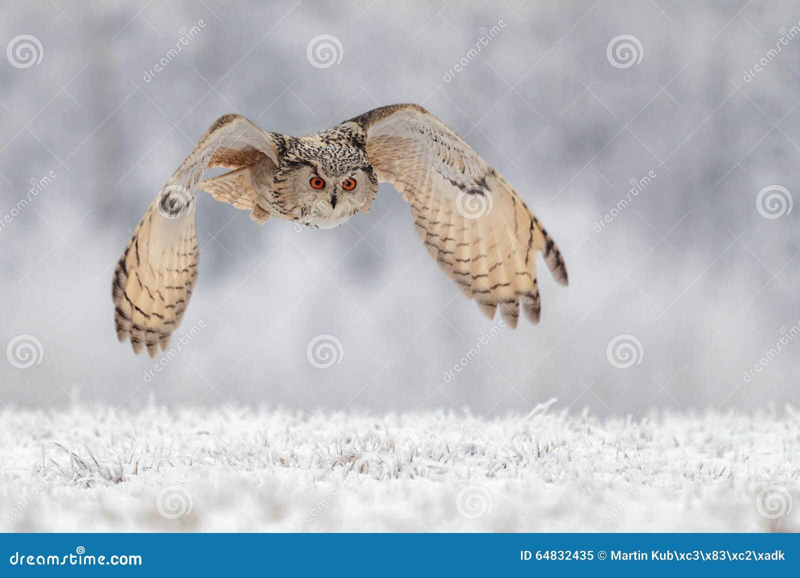 Πετώντας κουκουβάγια στο χιόνι