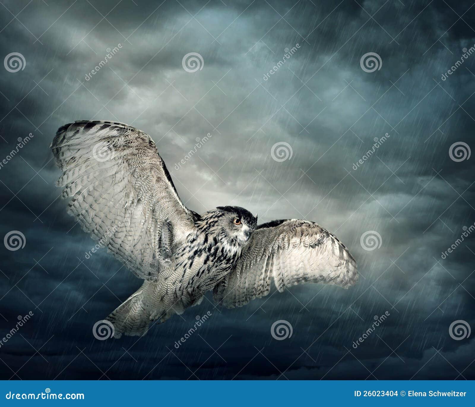 Πετώντας πουλί κουκουβαγιών