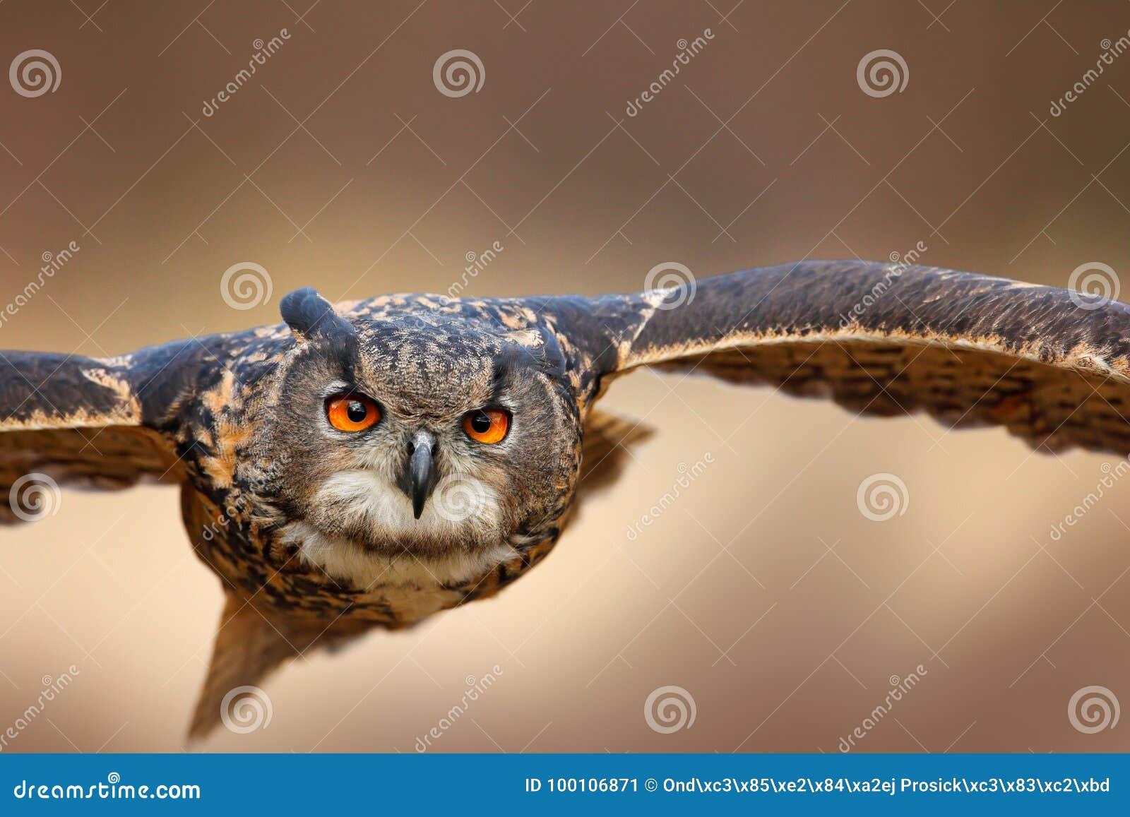 ξανθιά πρώτο μεγάλο πουλί