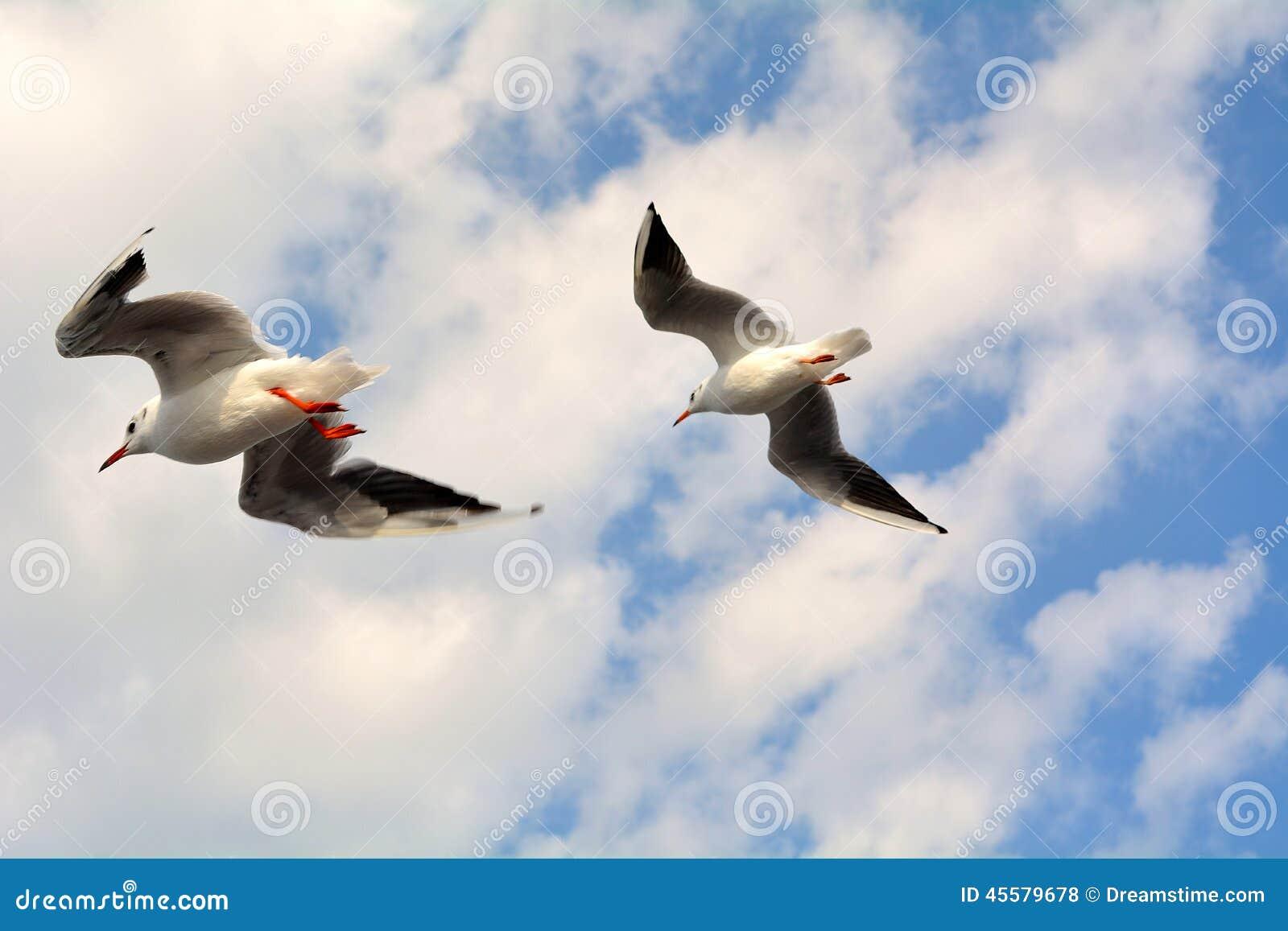 Πετώντας πουλιά