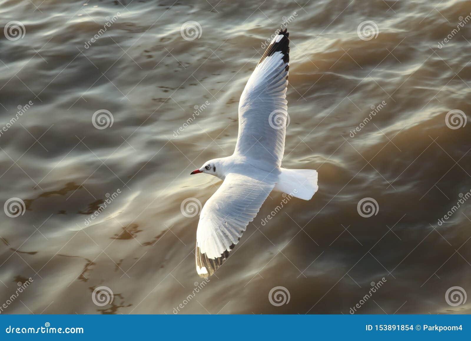 Πετώντας seagulls τοπ άποψης στον ωκεανό