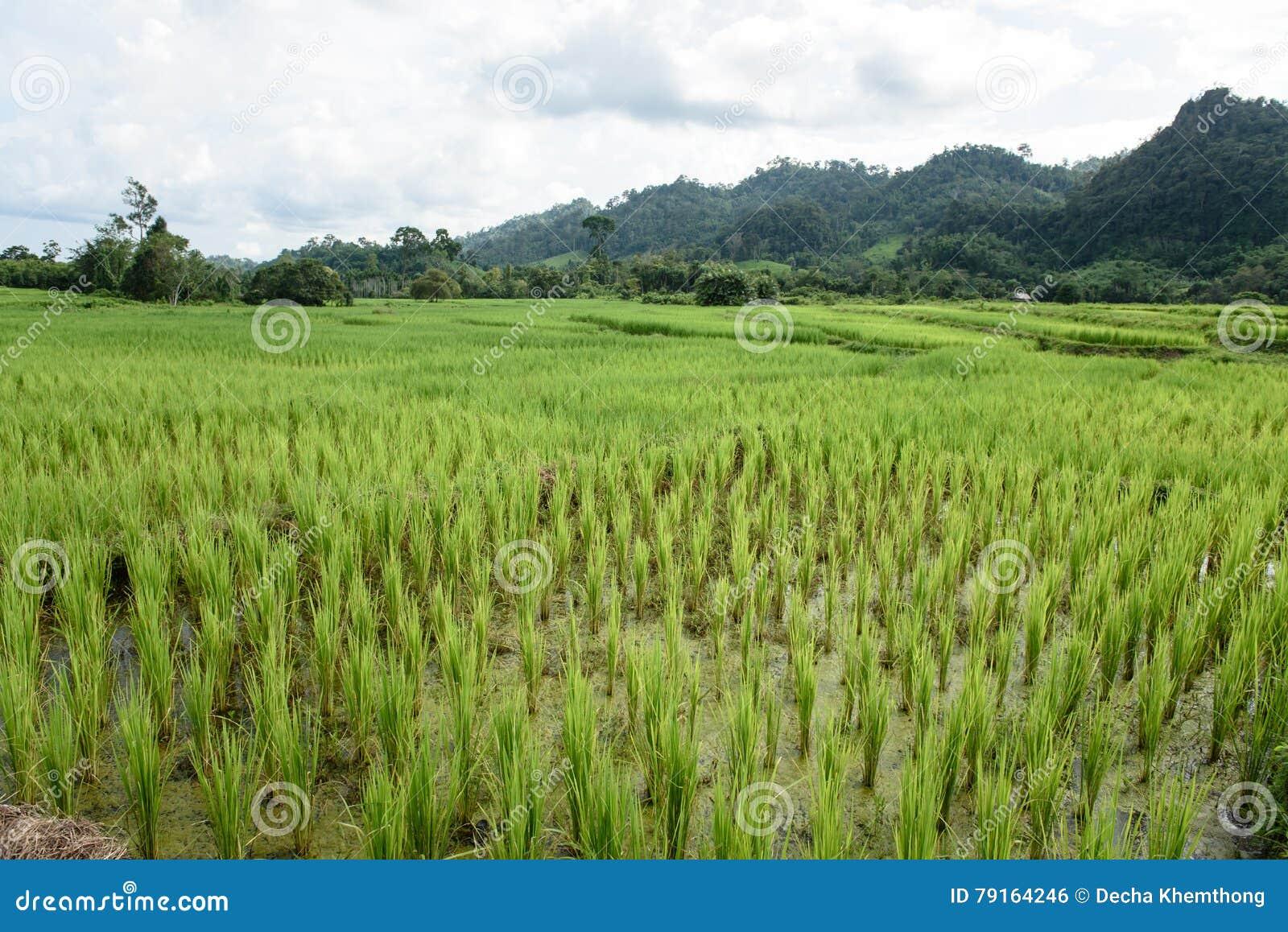 Πεδία πράσινου