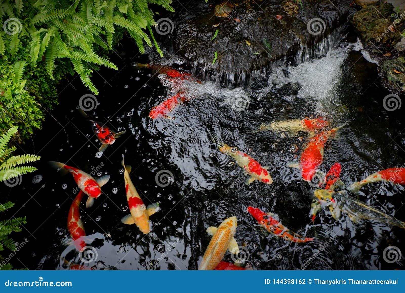 Πηγή νερού με τα ψάρια koi