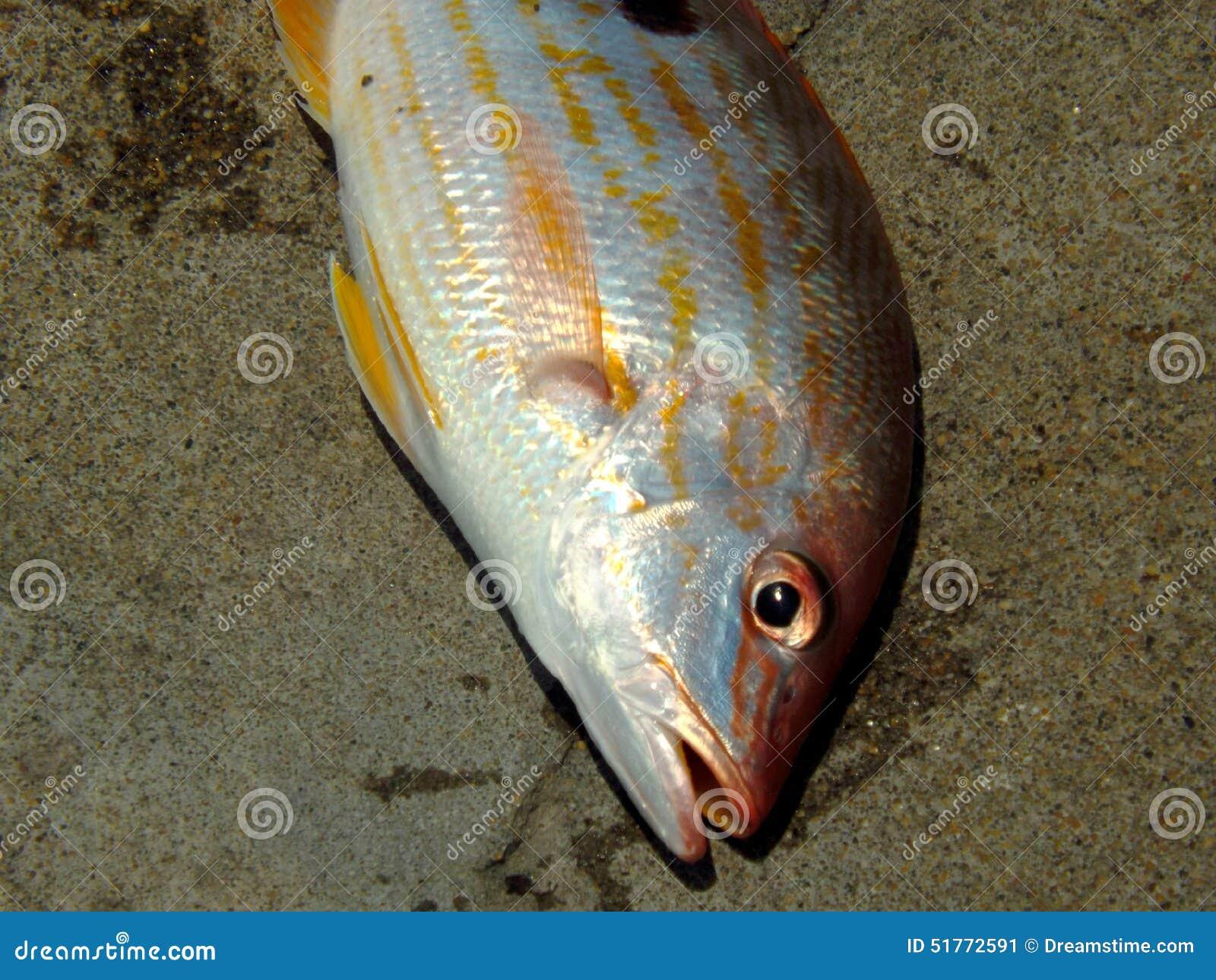 πιασμένα ψάρια πρόσφατα