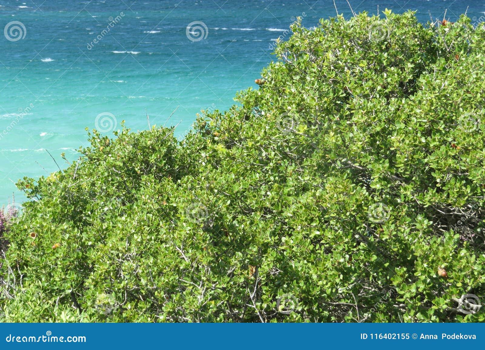 Πιό μπλε θάλασσα πάντα Πορφυρά λουλούδια Vourvourou Ελλάδα
