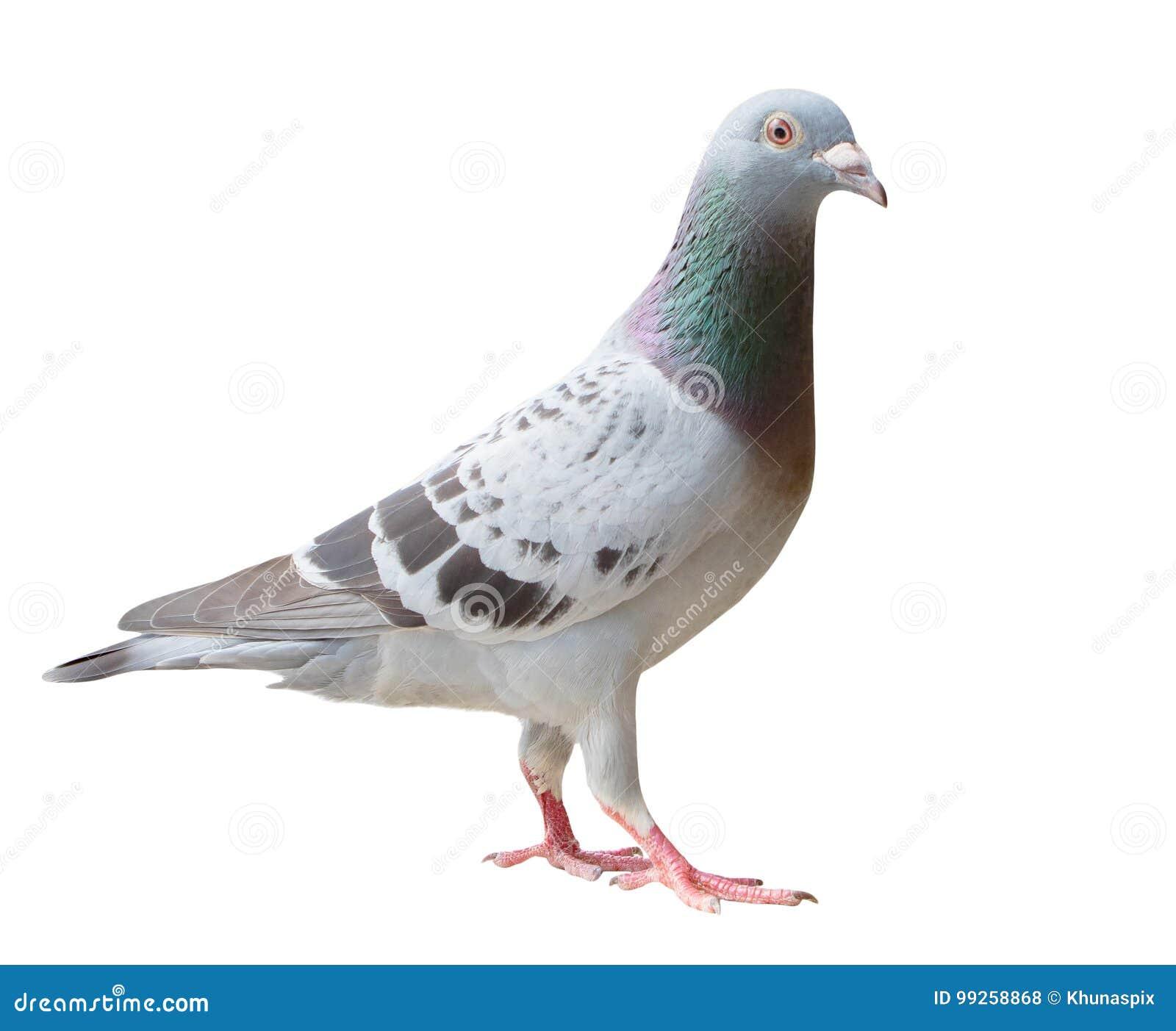 μεγάλο πουλί νεαρό κορίτσι κορίτσι αποπλάνησε λεσβία