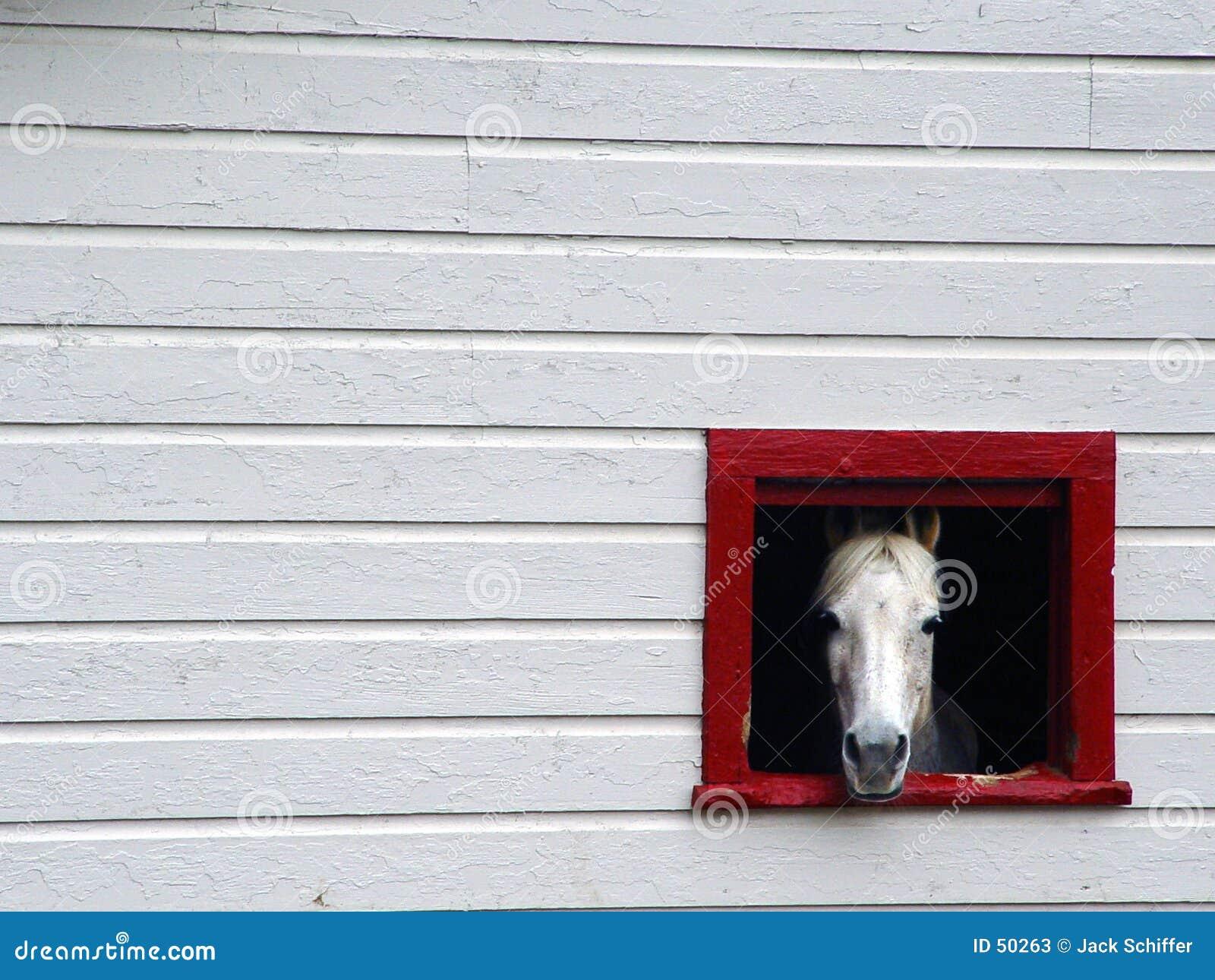 Download πλαισιωμένο άλογο στοκ εικόνα. εικόνα από άλογο, κοιτάξτε - 50263