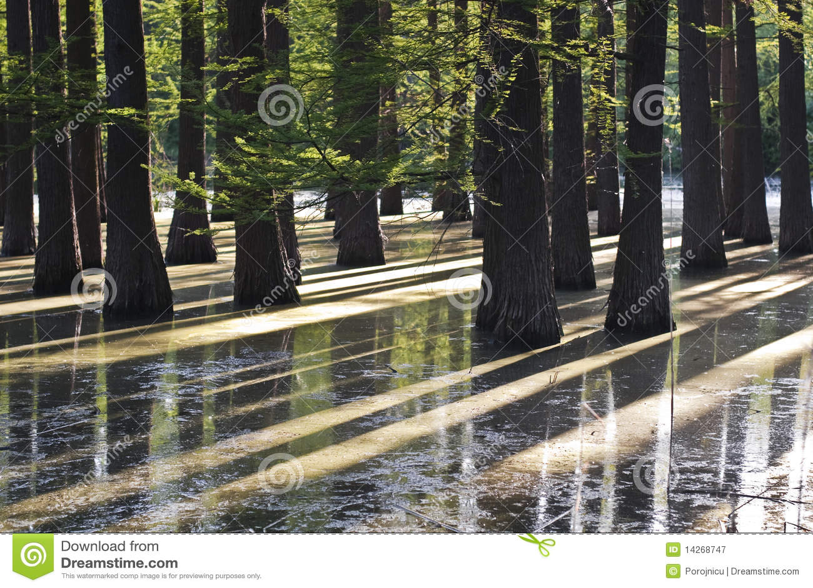 πλημμυρισμένο δάσος