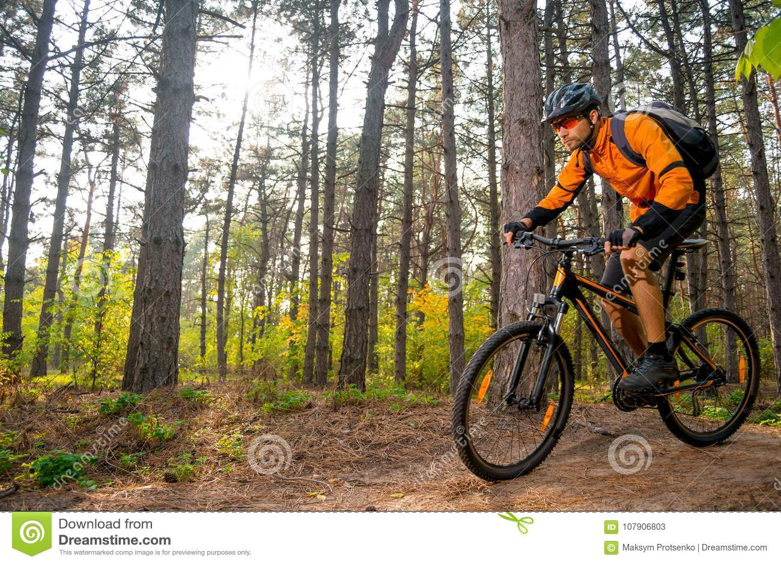 Ποδηλάτης στο πορτοκάλι που οδηγά το ποδήλατο βουνών στο ίχνος στο όμορφο δασικό LIT πεύκων από το φωτεινό ήλιο