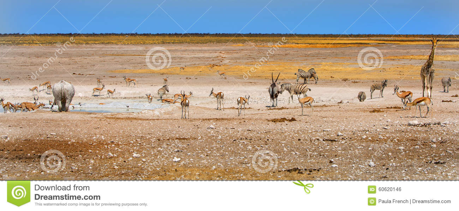 Ποικίλα ζώα γύρω από ένα waterhole στο εθνικό πάρκο Etosha