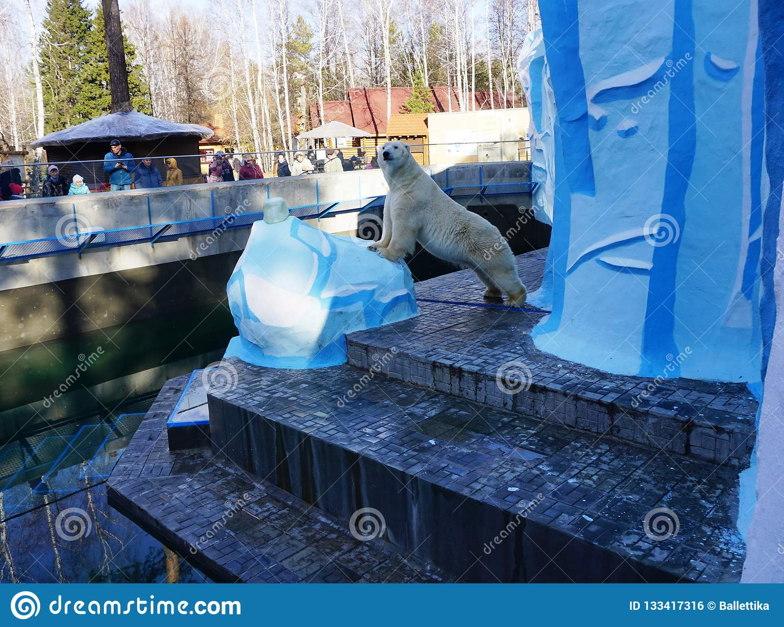 Πολική αρκούδα Kai στο ζωολογικό κήπο του Novosibirsk