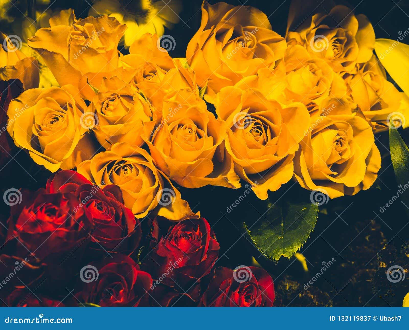 Πολλά τριαντάφυλλα κίτρινα και κόκκινα
