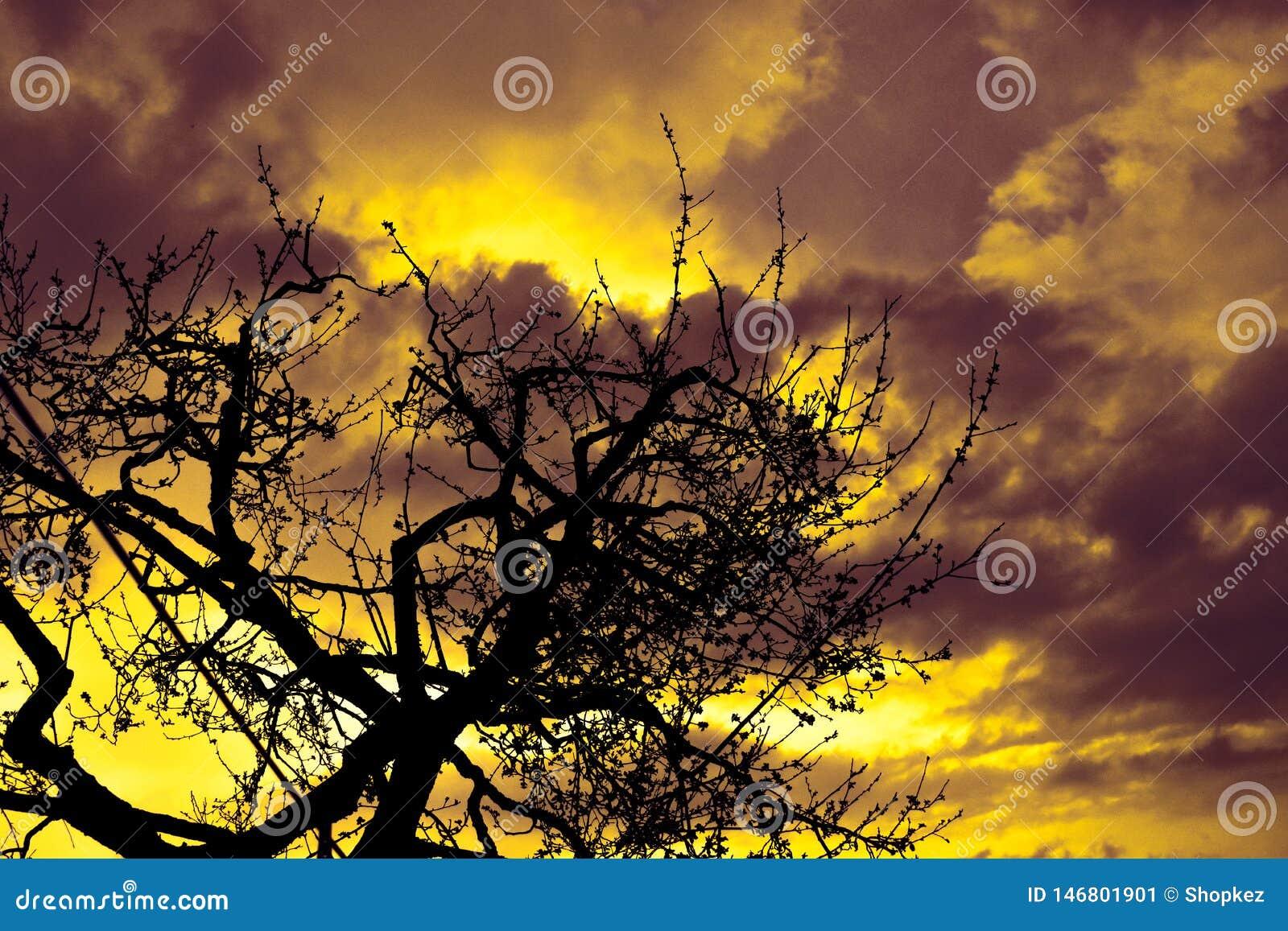 Πολυ χρωματισμένο ηλιοβασίλεμα με τα σύννεφα σκιαγραφιών δέντρων γραμμών και πυρκαγιάς