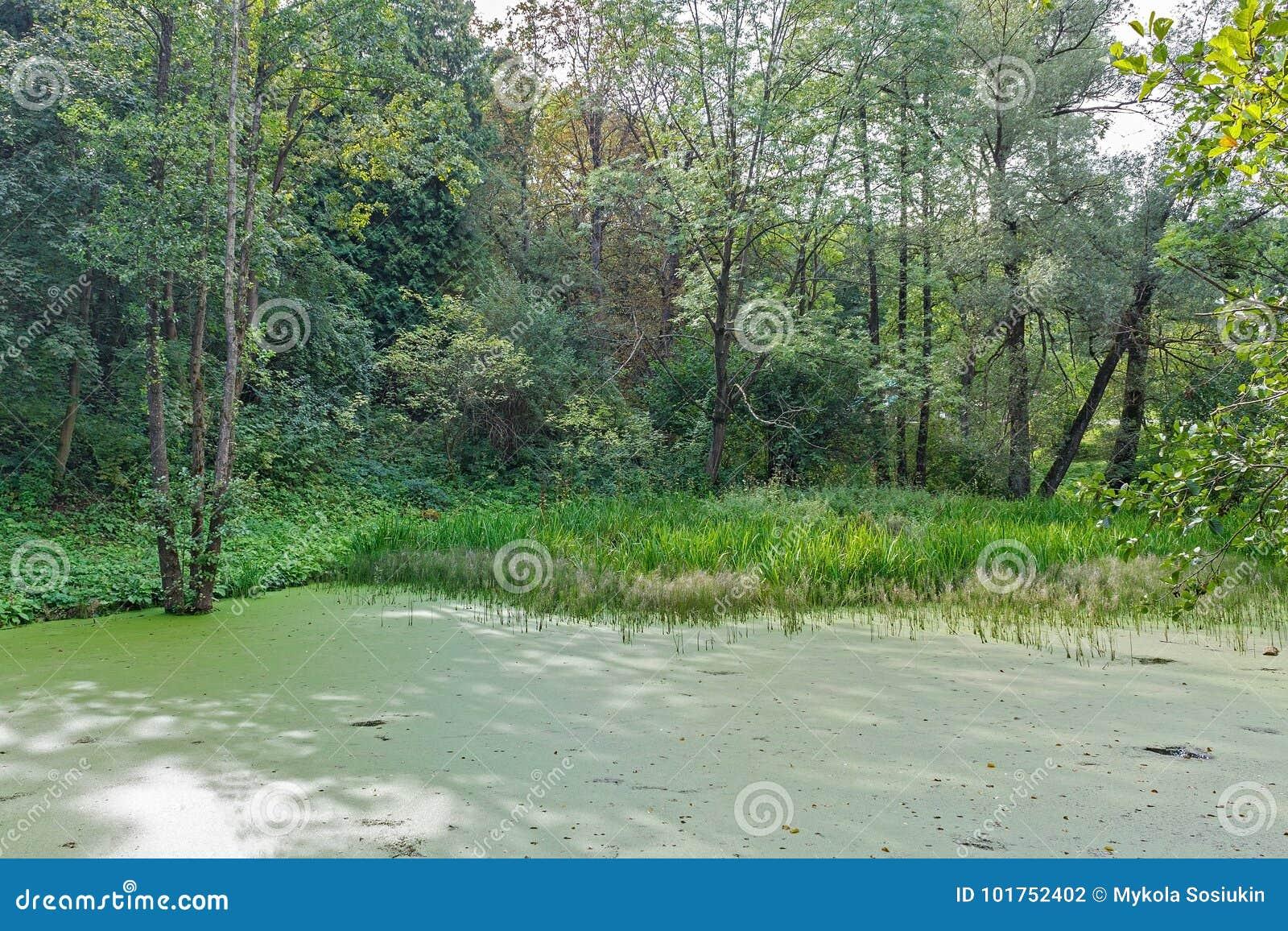 Πολύβλαστο πράσινο έλος και τροπική δασική σκηνή Ο ήλιος οξύνει μέσω του παχιού φυλλώματος για να αποκαλύψει ένα πανέμορφο φυσικό