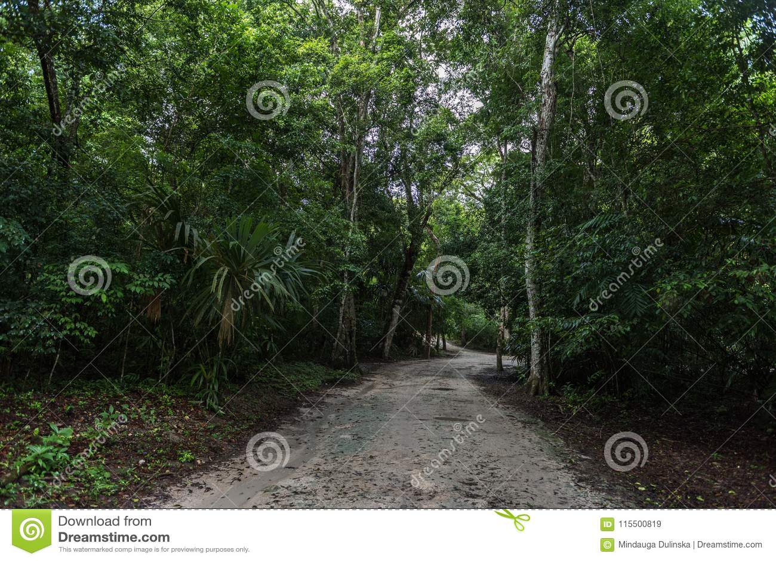 Πορεία ζουγκλών στο πάρκο Tikal Αντικείμενο επίσκεψης στη Γουατεμάλα με τους των Μάγια ναούς και τις εθιμοτυπικές καταστροφές
