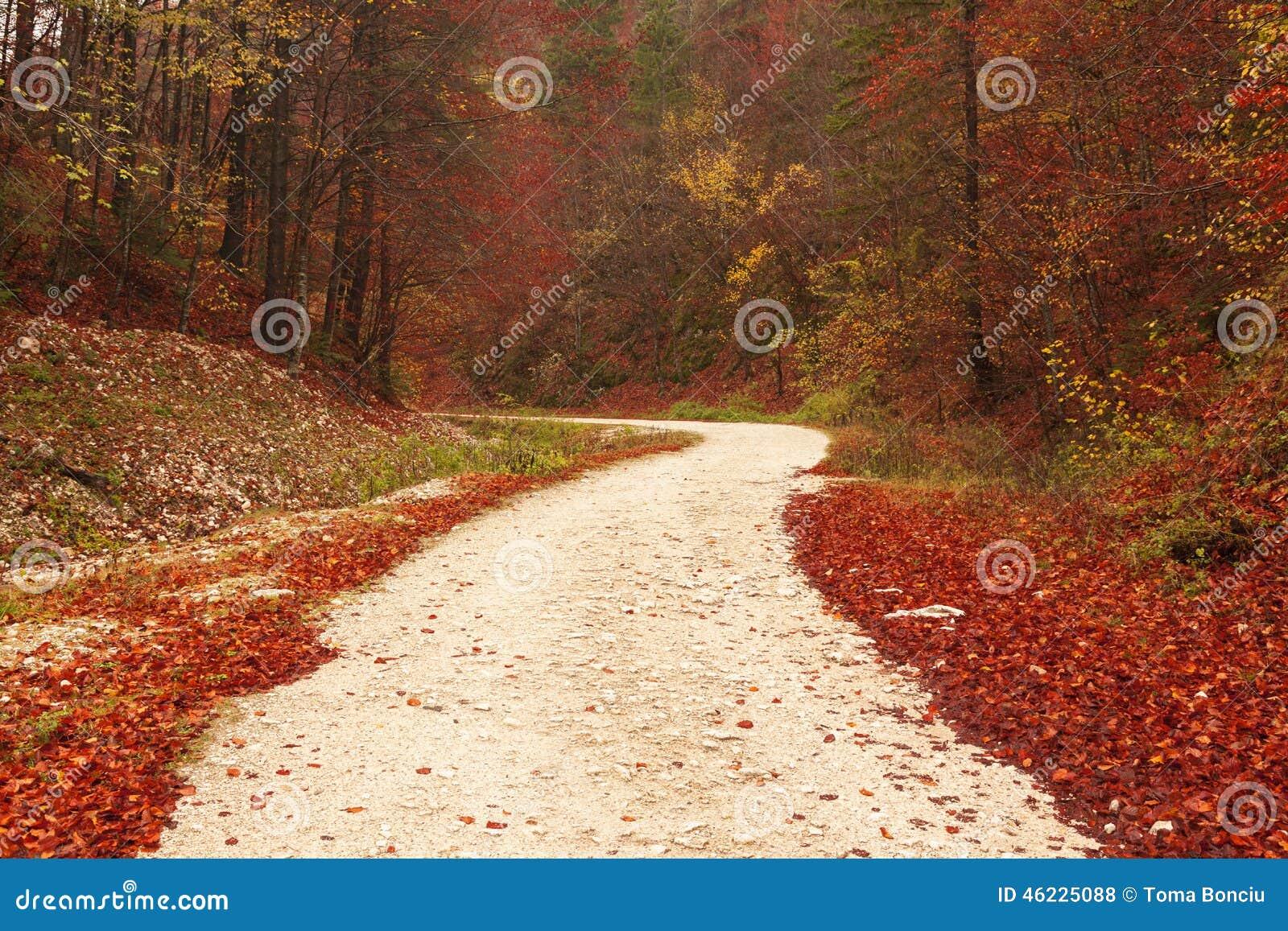 Πορεία φύσης μέσω των κόκκινων φύλλων