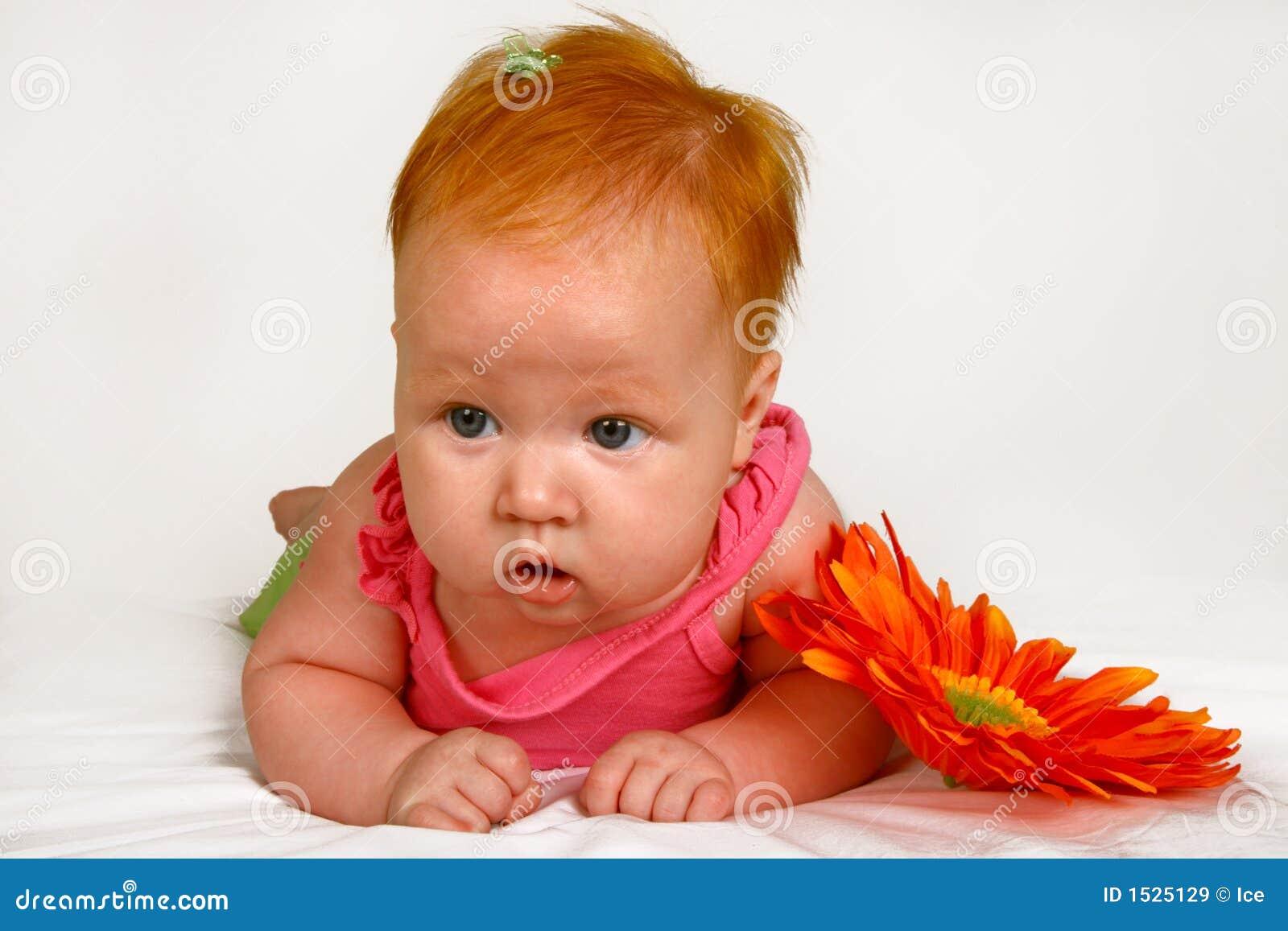 πορτοκάλι μαργαριτών μωρών