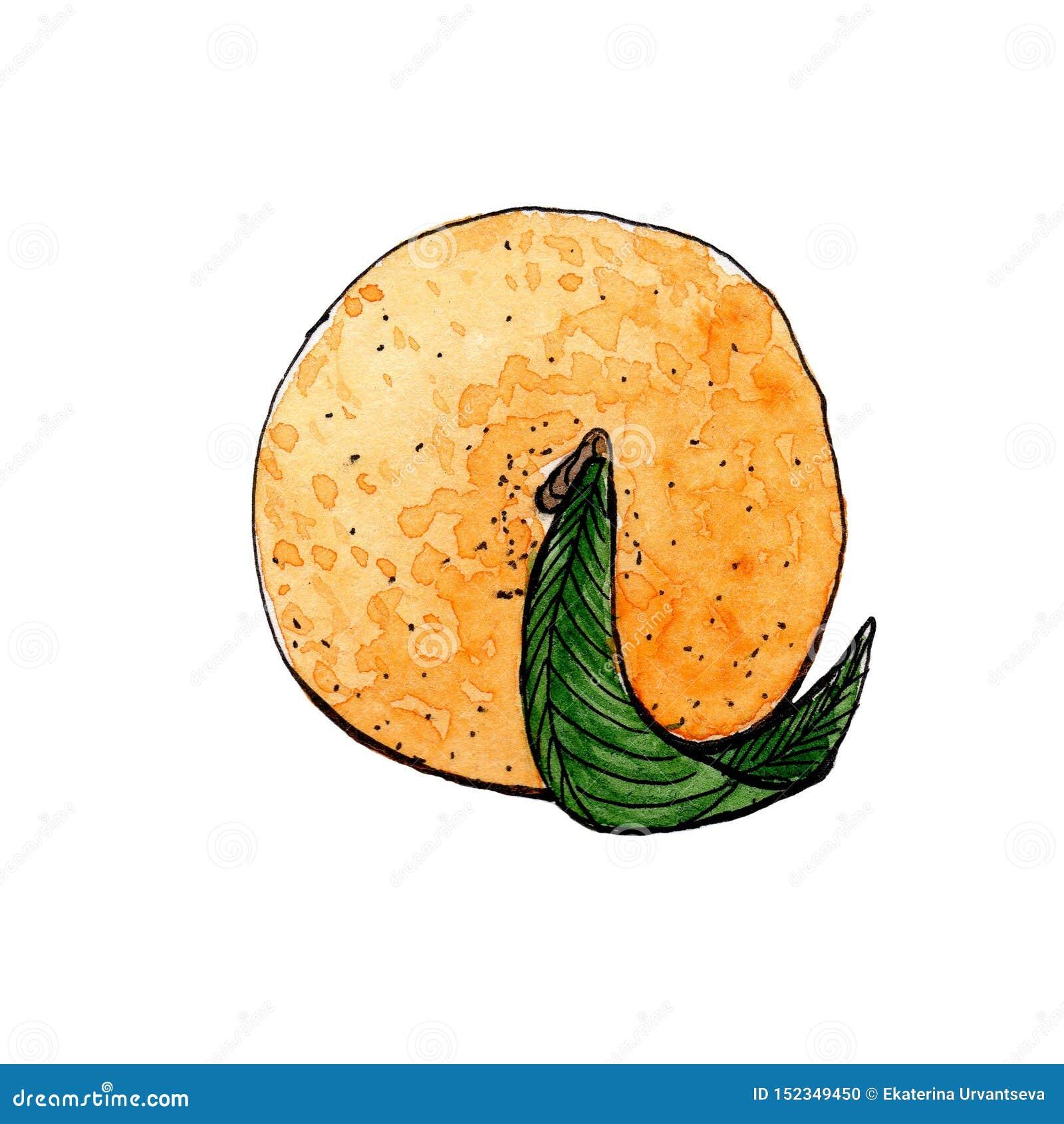 Πορτοκαλί μανταρίνι με το πράσινο watercolor σκίτσων φύλλων E