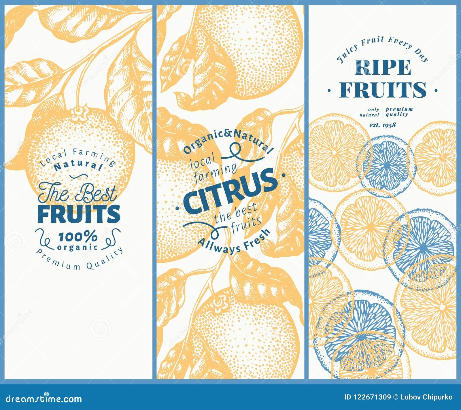 Πορτοκαλί σύνολο εμβλημάτων φρούτων Συρμένη χέρι διανυσματική απεικόνιση φρούτων Χαραγμένο υπόβαθρο εσπεριδοειδών ύφους εκλεκτής