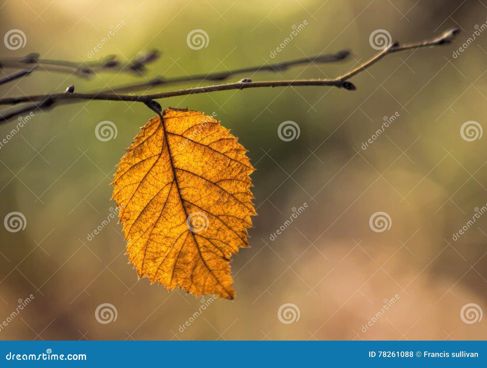 Πορτοκαλί φύλλο στον κλάδο το φθινόπωρο