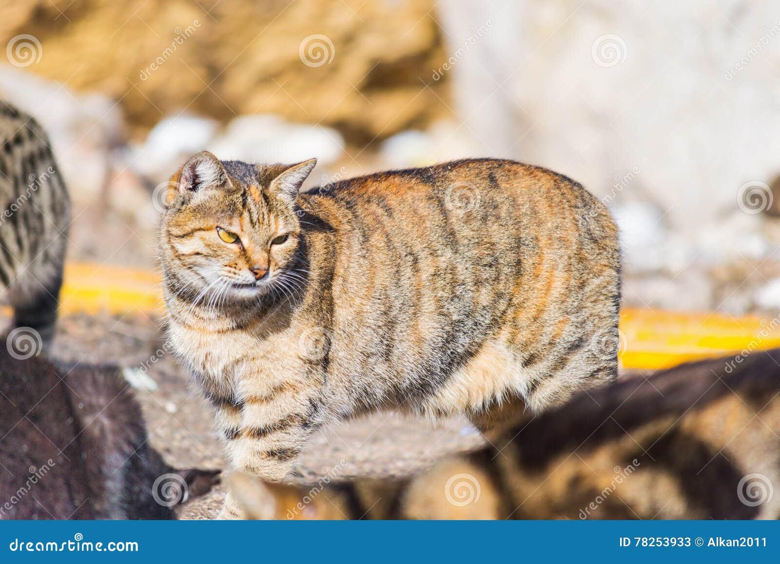 Πορτοκαλιά γάτα στην οδό