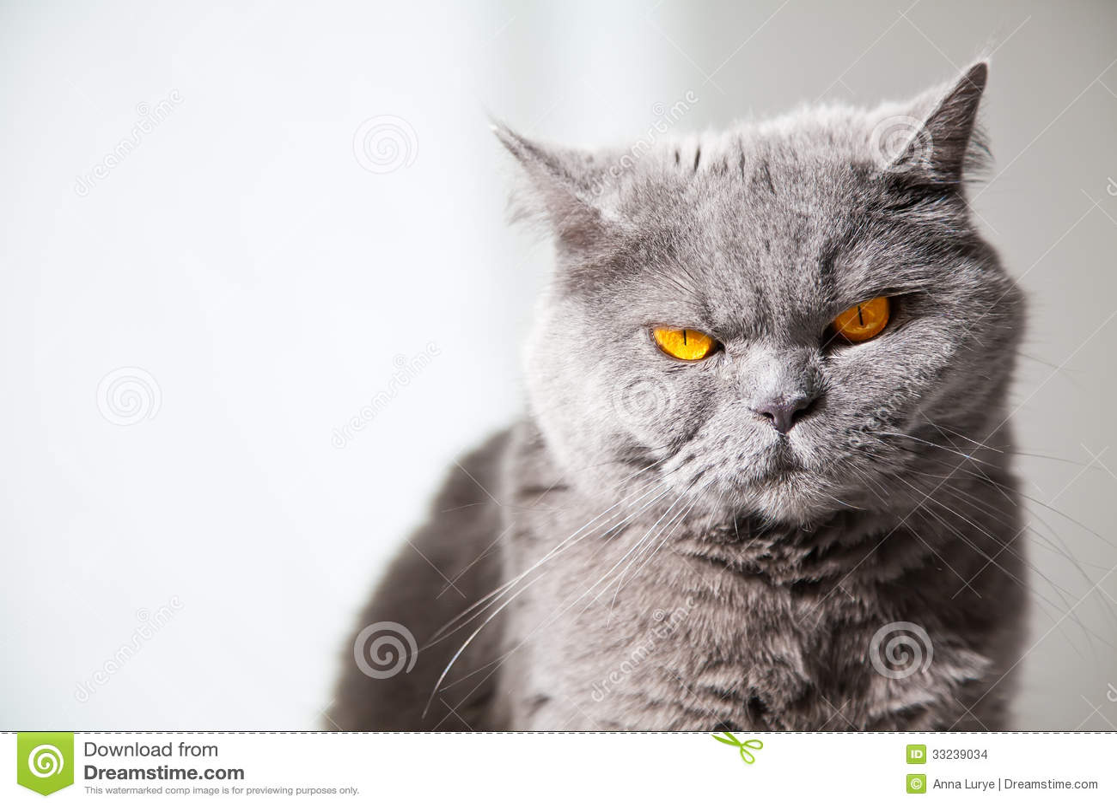 Πορτοκαλιά μάτια γάτας