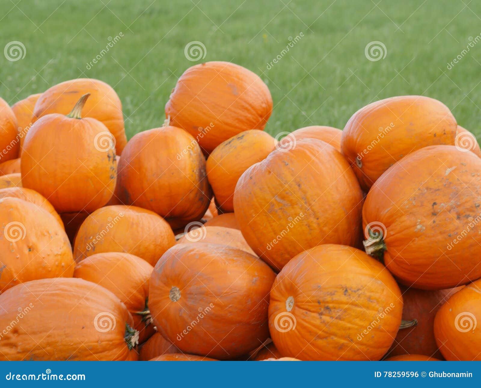 Πορτοκαλιές κολοκύθες Helloween υπαίθρια