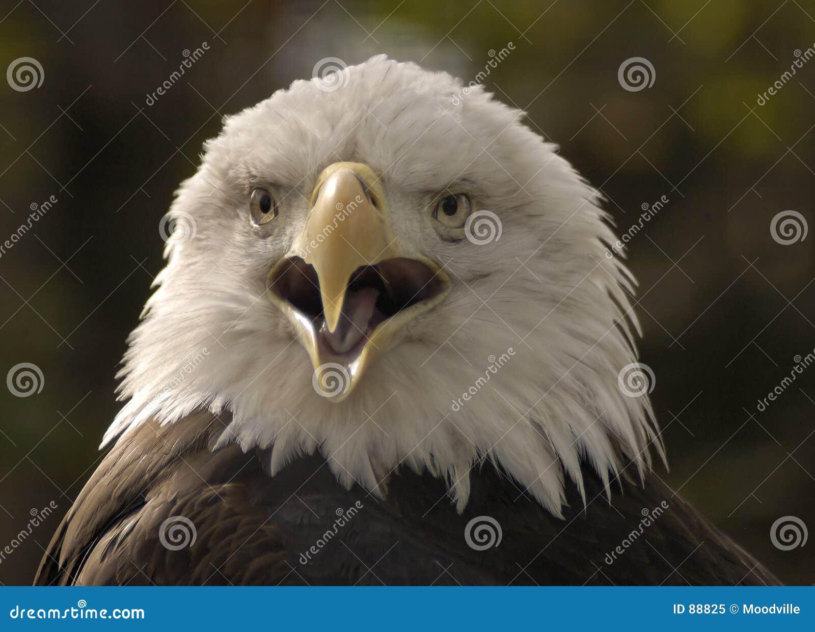 πορτρέτο αετών