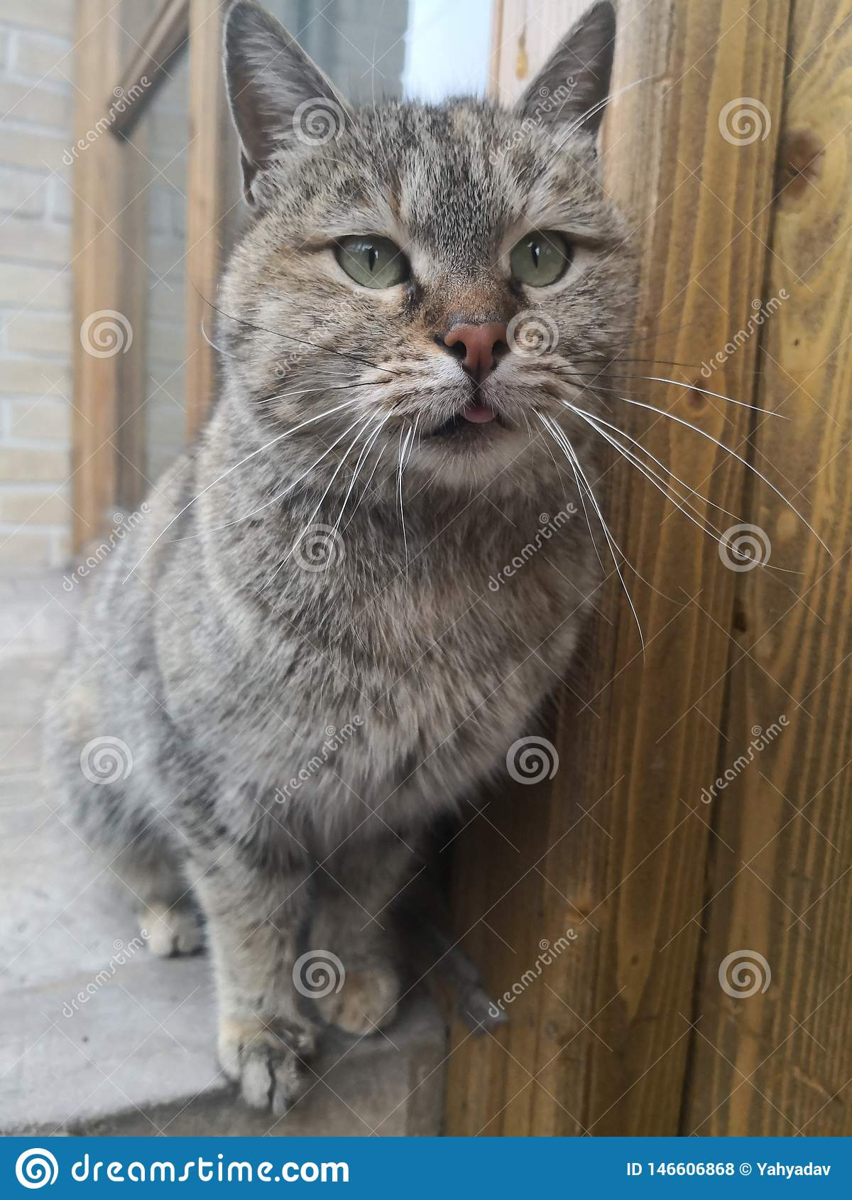 πορτρέτο γατών που περιμένει τα τρόφιμα