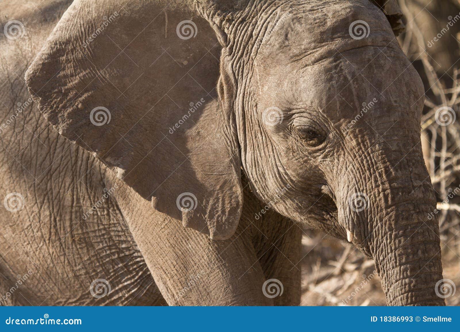 πορτρέτο ελεφάντων