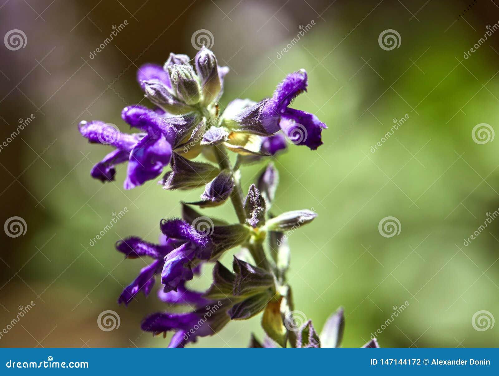 Πορφυρά λουλούδια σε ένα πάρκο, μακροεντολή