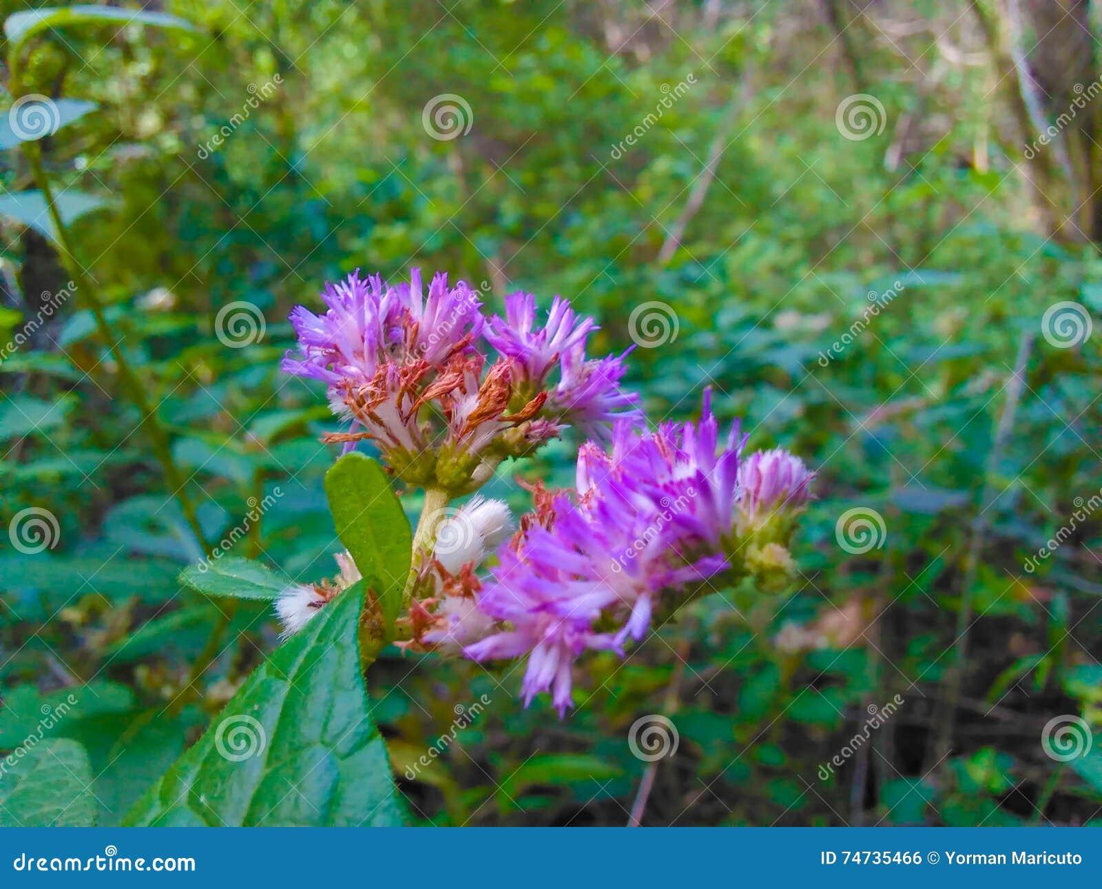 Πορφυρή φωτογραφία λουλουδιών