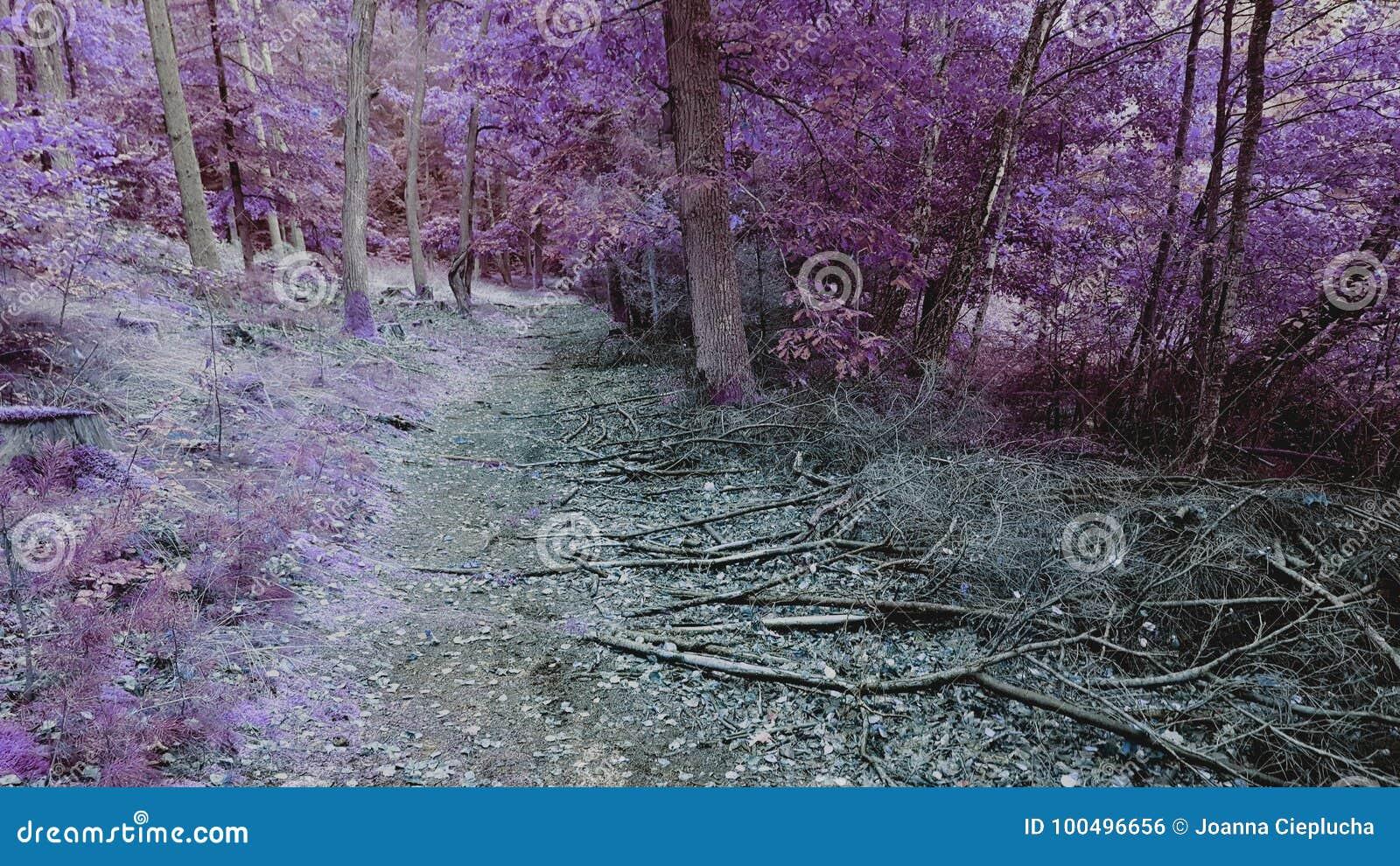 Πορφυρό δάσος