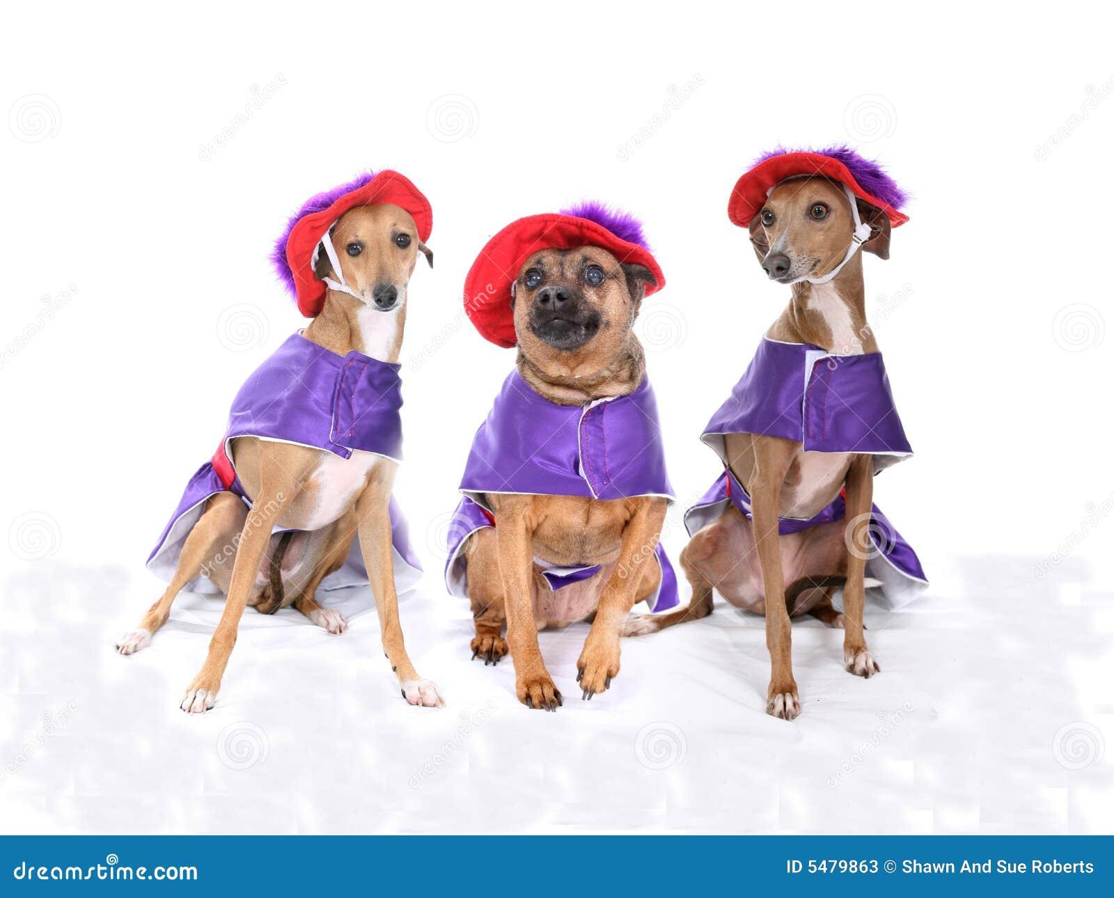 πορφυρό κόκκινο τρία σκυλιών κοστουμιών που φορά