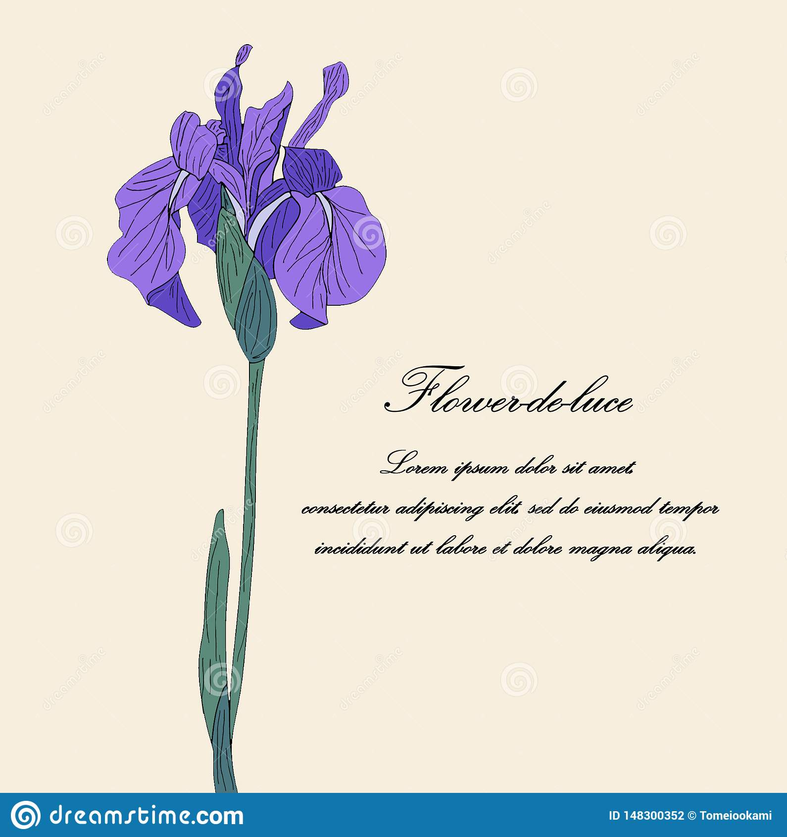 Πορφυρό συρμένο χέρι λουλούδι ίριδων στο ελαφρύ μπεζ υπόβαθρο