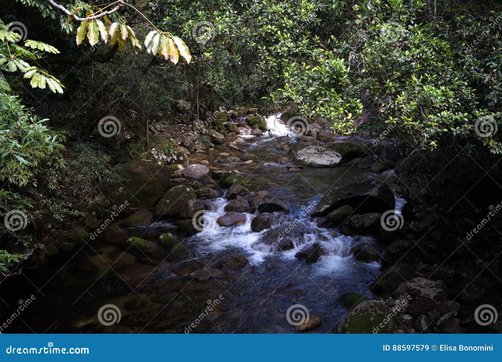 Ποταμός στο τροπικό δάσος