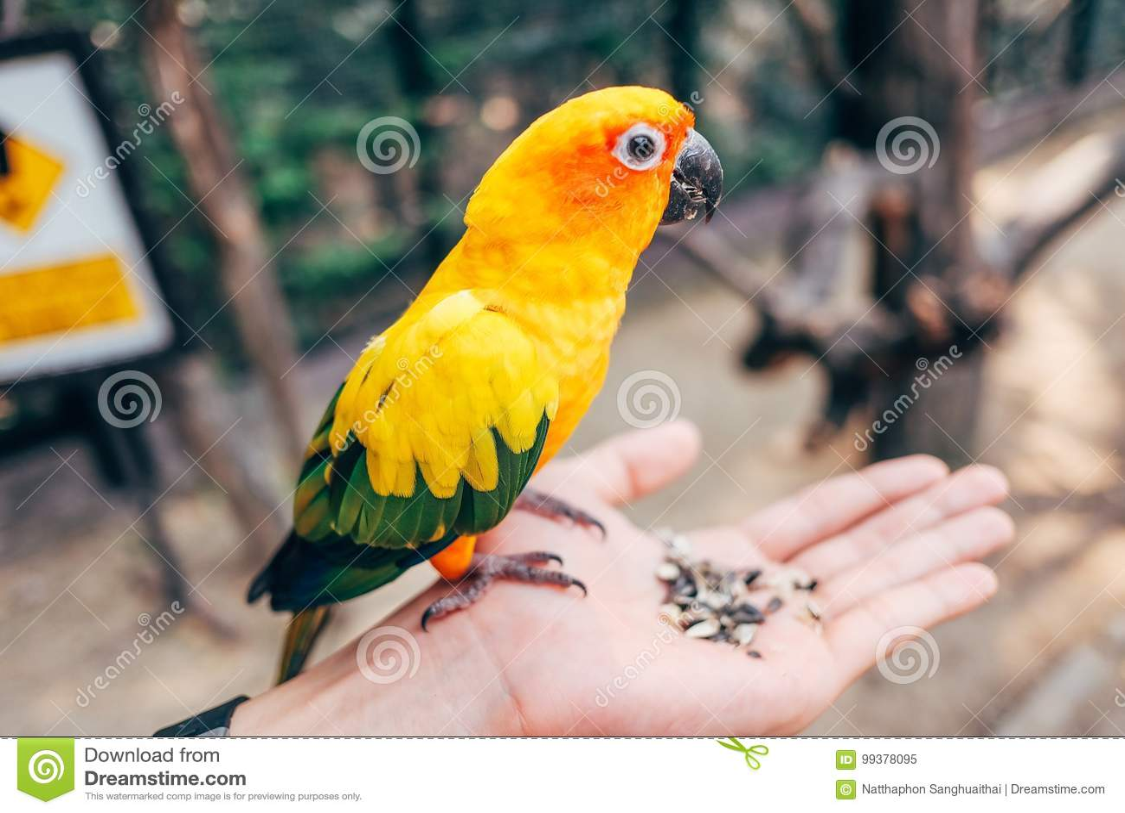 Πουλί αγάπης
